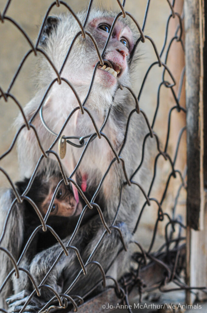 A mother and child at a macaque breeding facility. Laos, 2011.