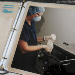 A binder of images and text about animal use in labs. USA, 2008.